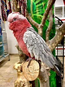 i pappagalli Animali Felici a Cassola Vicenza