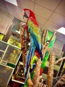 i pappagalli di Animali Felici Cassola Vicenza